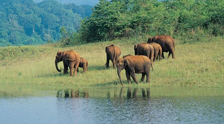 Periyar Wildlife Sanctuary Thekkady